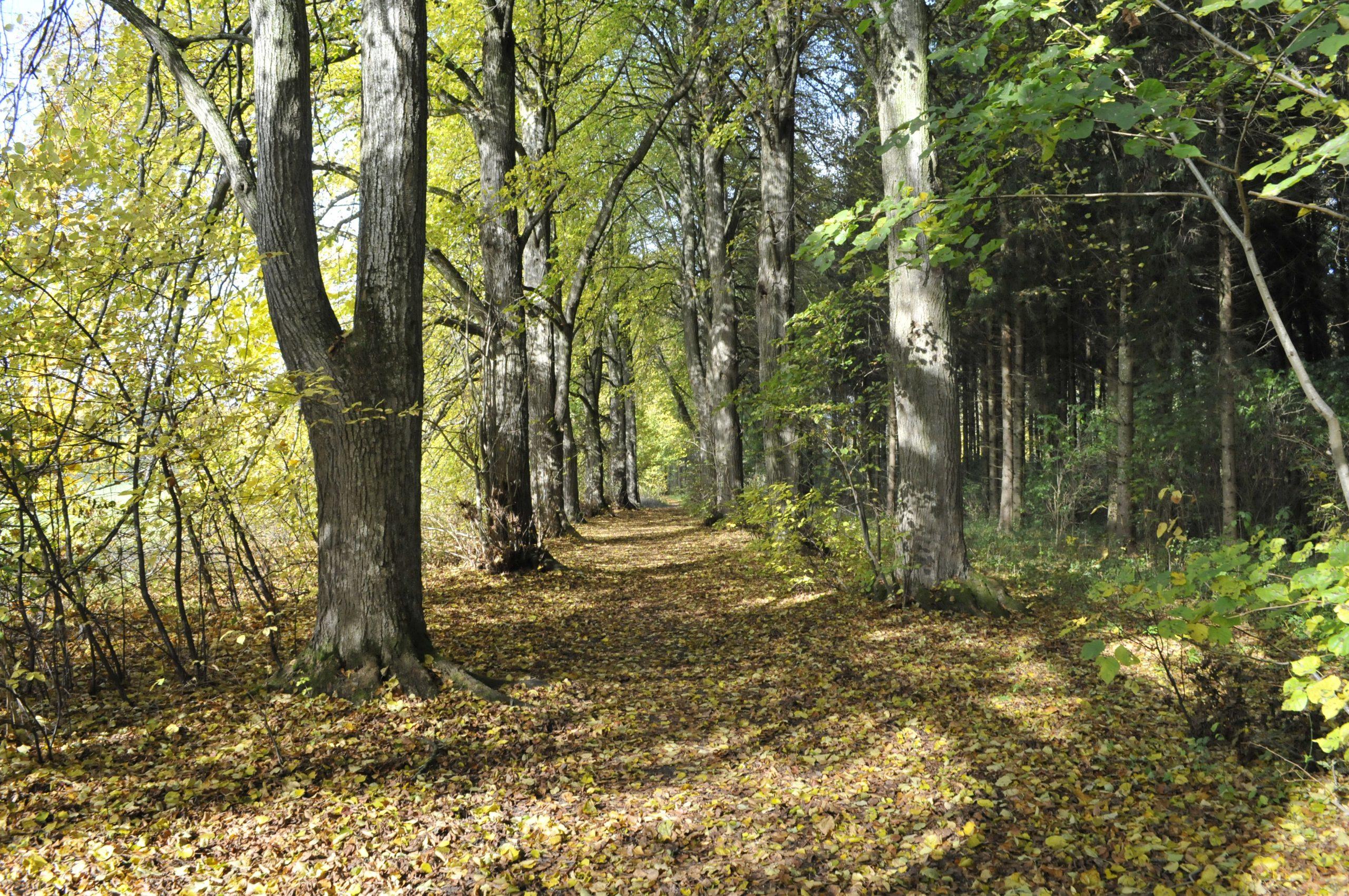 Natur-Erlebnistour durch den Bürgerwald